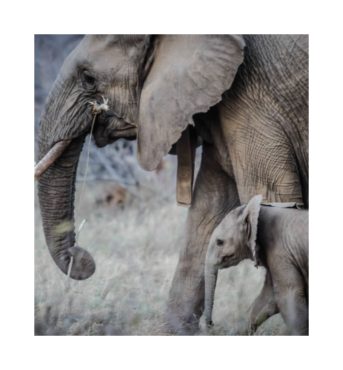 Elephant and baby 2